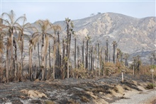 Ventura, California - The aftermath of the Thomas fire in the Rincon Beach area